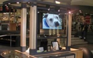hopalong animal rescue katrina digital display