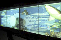 Visitors to Aquaria are greeted with visually arresting digital signage